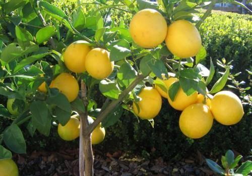 как вырастить овощи и фрукты дома