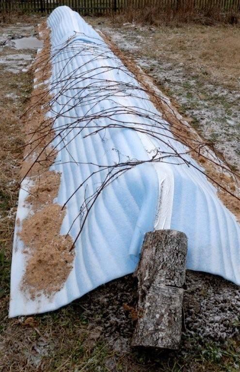 при скольки мороза закрывать виноград положены