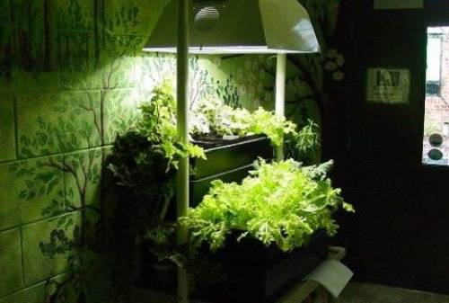 Освещение овощей