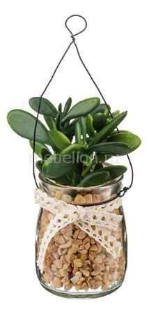 Купить АРТИ-М (5.5х11 см) Денежное дерево 166-105