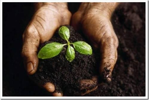 Плодородный грунт – в чём преимущества?