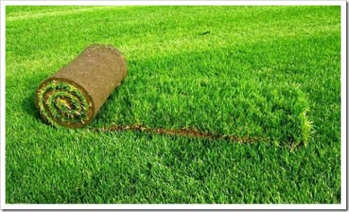 Как часто поливать газон?
