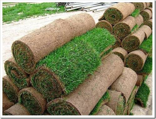 Прокатка газона катком