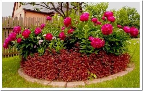 Почему многие предпочитают именно многолетние цветы?