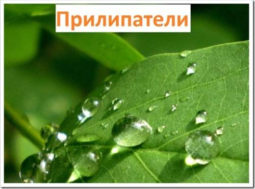 Прилипатель для растений