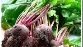 Основные правила выращивания сахарной свёклы