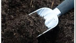 Чем отличается плодородный грунт от любой земли, доступной практически всюду