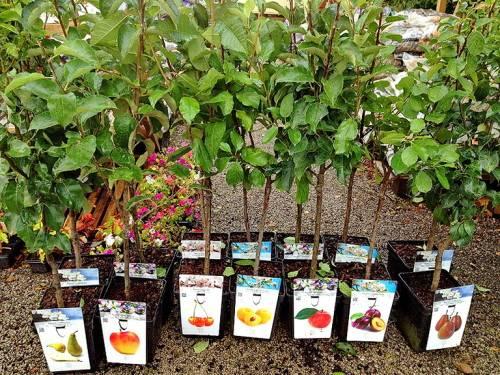 Какие растения покупать в питомнике растений в апреле-мае