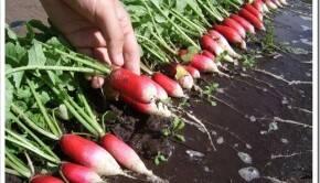 Выбираем наименования овощей в привязке к рынку