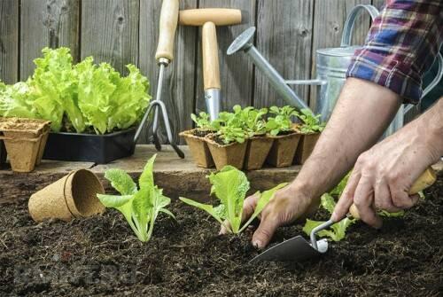 Что посадить в огороде, чтобы не ухаживать