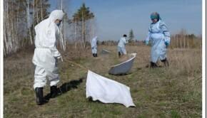 Методика выполнения инсектицидной обработки