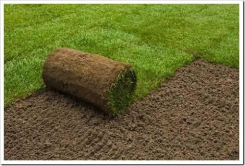 Явные преимущества рулонного газона